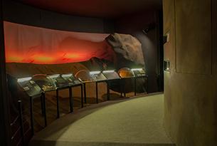 Museo di zoologia Roma bambini, vita al limite