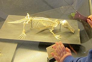 Museo di zoologia Roma bambini, scheletri