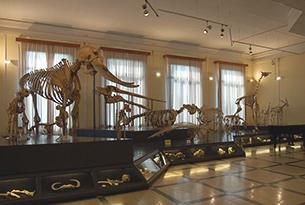 Museo di zoologia Roma bambini, sala degli scheletri