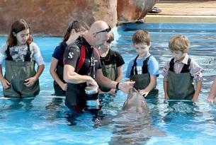 nizza-marineland-delfini