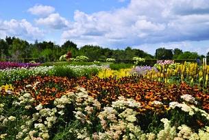 olanda giardini di Appletern Gardenfestival