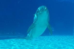 oltremare_delfini