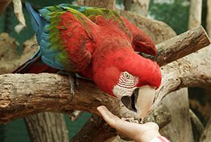 oltremare_pappagalli