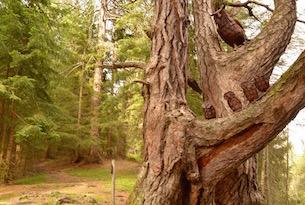 osttirol-alti-tauri-glossglockner-foresta-l