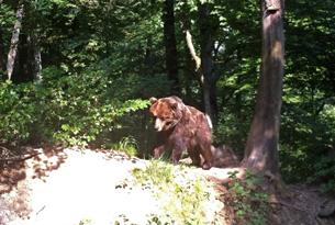 paganella-blogtour_bear