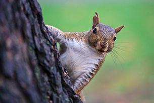 parco-sensoriale-viterbo-scoiattolo
