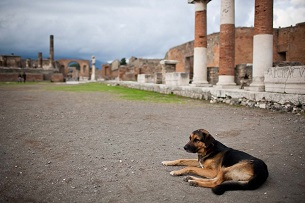 pompei_dog_ph_luca_moglla