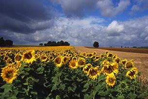 provenza-provenza_fioriture
