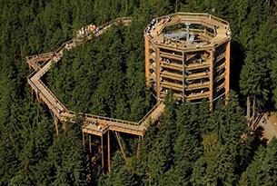 repubblica-ceca-natura-lipno-sentiero-alberi