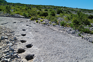 rovereto-musei-piste dinosauri_paolo calza
