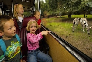 safaripark-beeksebergen-kindereninbus