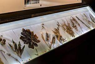 sicilia-gole_alcantara-museo