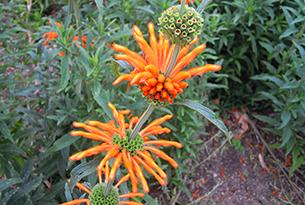 sudafrica-Kirstenbosch-sudafrica_171