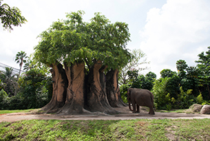 zoo-miami-african-elephant-15