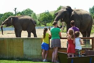 zoo_dierenrijk