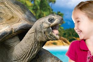Pasqua nei parchi divertimento, tartarughe giganti a Zoomarine (RM)